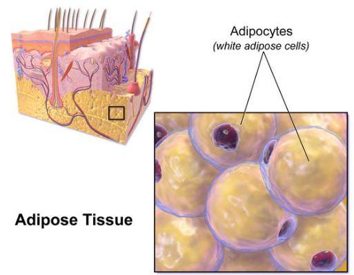 Adipose-36_virus